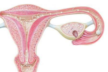 Кистозное образование яичника слева