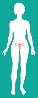 Гинекология женщины