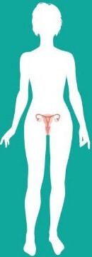 Очертания женского тела