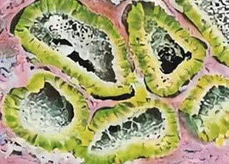Микроснимок внутреннего содержимого