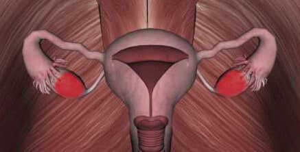 Мышцы, которые окружают придатки