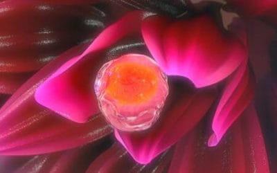 О чем говорит появление доминантного фолликула в левом яичнике
