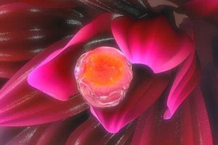 Выпуск клетки для оплодотворения