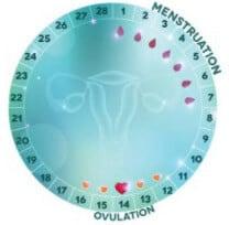 Регулярный менструальный цикл